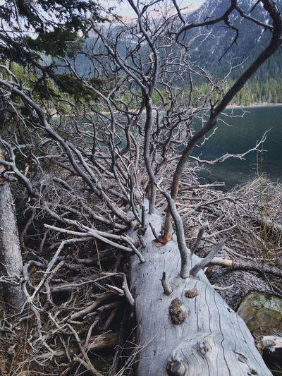 Creepy Trees Waterton Cool Creepy Yes Hipster Indie Grunge