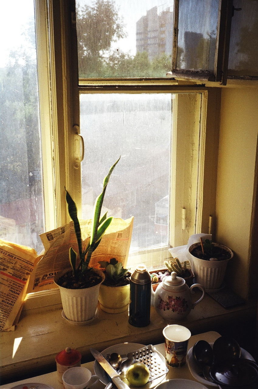 High Angle View Of Potted Plants On Window Sill At Home