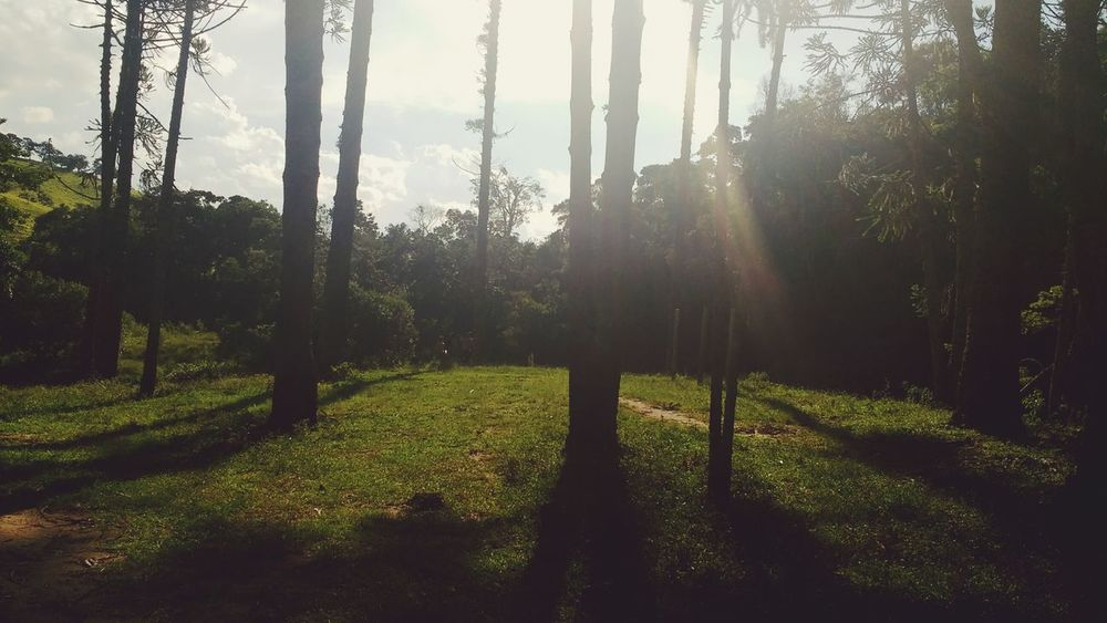 Tree Growth Nature Grass Sunlight Beauty In Nature No People Outdoors Day Sky Golf Course