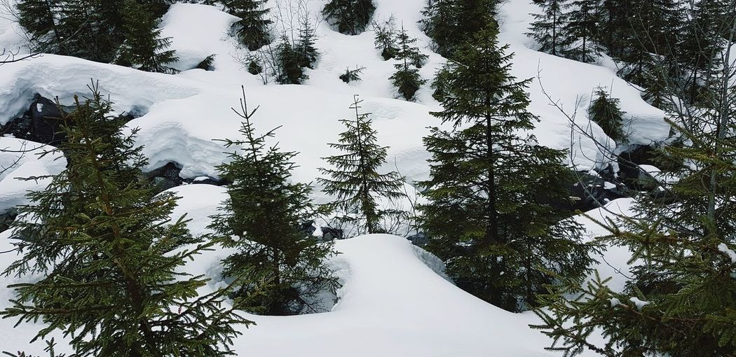 Tree Forest High Angle View Snow Covered Snowcapped Cold Snow Peak Snowfall Deep Snow Winter Bare Tree Weather White Silhouette Scenics Tranquil Scene Snowcapped Mountain Weather Condition