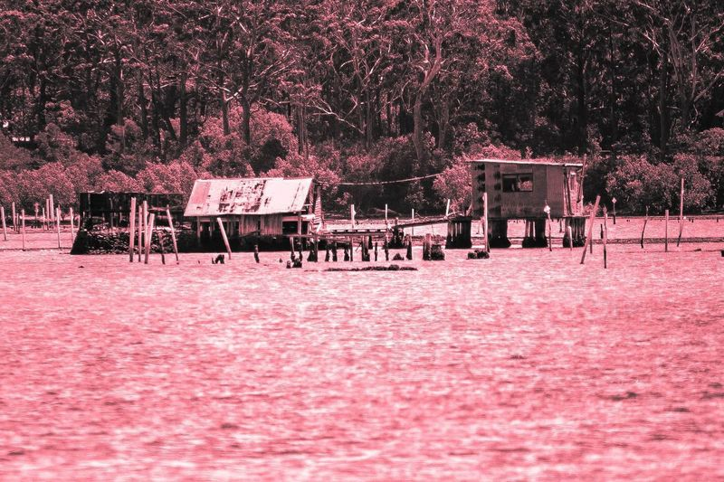 Something abit different Outdoors Day Water Oyster Farm Oyster  Riverside Photography River EyeEmNewHere Port Macquarie