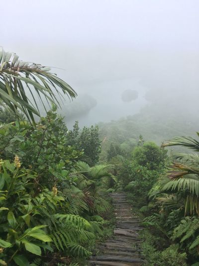 Dominica Beauty In Nature Day Fog Growth Landscape Mountain Nature No People Outdoors Palm Tree Plant Scenics Sky Tranquility Tree