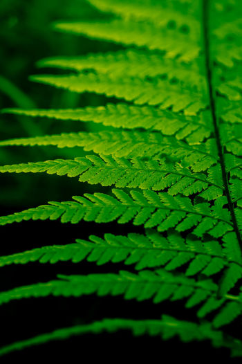 Green Color Leaf Plant Part Plant Close-up No People Growth Selective Focus Nature Fern Beauty In Nature Full Frame Day Backgrounds Natural Pattern Outdoors Pattern Freshness Green Tranquility Leaves
