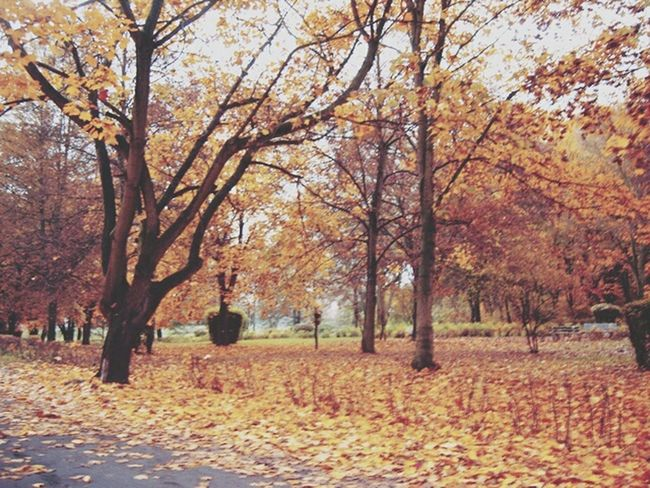 Autumn Colors Colours Of Autumn Autumn In The Park  Color Photography Nature_perfection