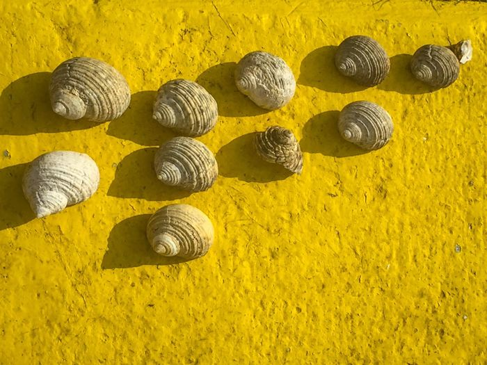 Check This Out Hello World Showcase April The KIOMI Collection The Great Outdoors - 2016 EyeEm Awards IPhone Photography Iphoneonly Iphonephotography Natural Beauty Nature's Diversities Motus Natura Seashell Collection Seashells Seashell Seashell❤ Sea Shells Yellow Yellow Color Concrete Empty Shell EyeEm Guam EyeEm X Getty Images The Week On EyeEm Telling Stories Differently Fresh On Eyeem  My Favorite Photo