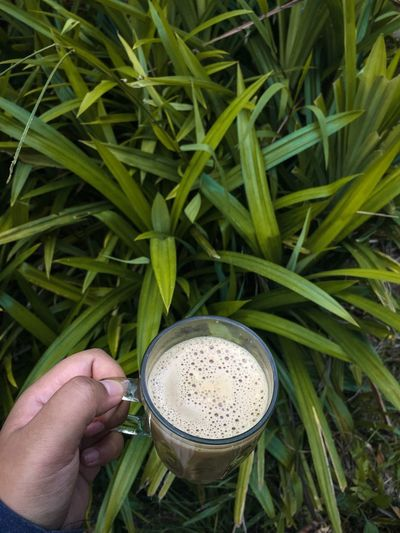 coffee with pandan leaf background Hitea Pandan Leaf Human Hand Hand Food And Drink Human Body Part One Person Green Color Plant Leaf Growth Lifestyles Personal Perspective Nature Drink Plant Part Adult Finger Holding Food High Angle View
