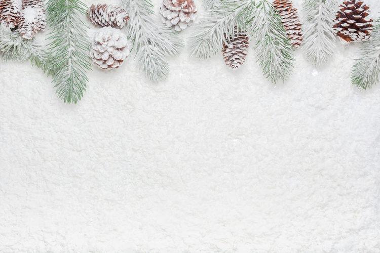 Close-up of snow on pine tree