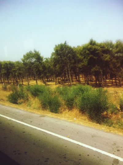 On The Road Hugging A Tree Taking Photos Paysage
