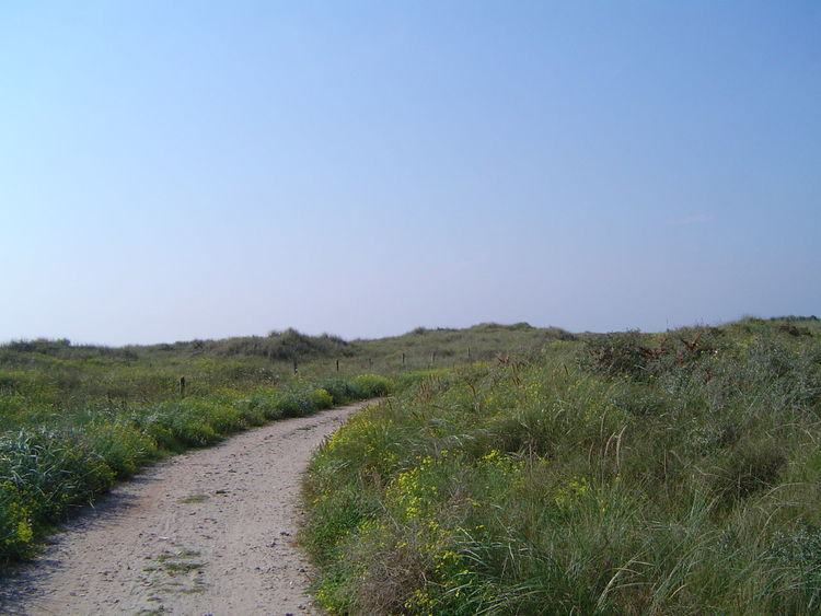 Adventure Beauty In Nature Blue Borkum, Germany Clear Sky Day Dirt Road Field Grass Landscape Nature No People Outdoors Plant Road Rural Scene Scenics Sky Summer The Way Forward