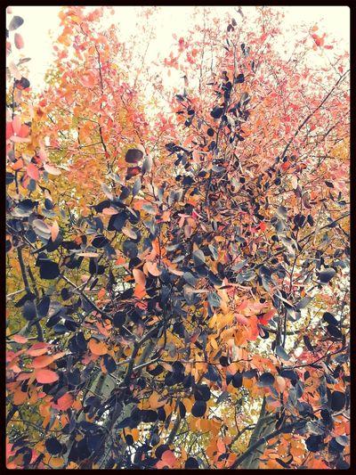 Autumn Leaves Dani Filter TreePorn