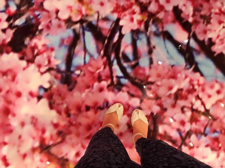 今回も足元をパシャリ✨ Human Leg Real People Human Foot Pink Color Women Human Body Part Day Close-up Flower Nature Cherry Blossoms Photo Japan Art Lifestyles 桜 蜷川実花