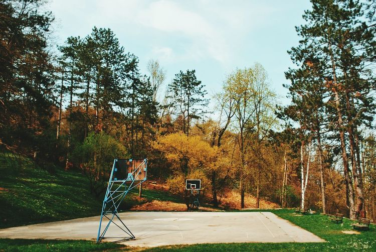 Basketball court by trees during autumn