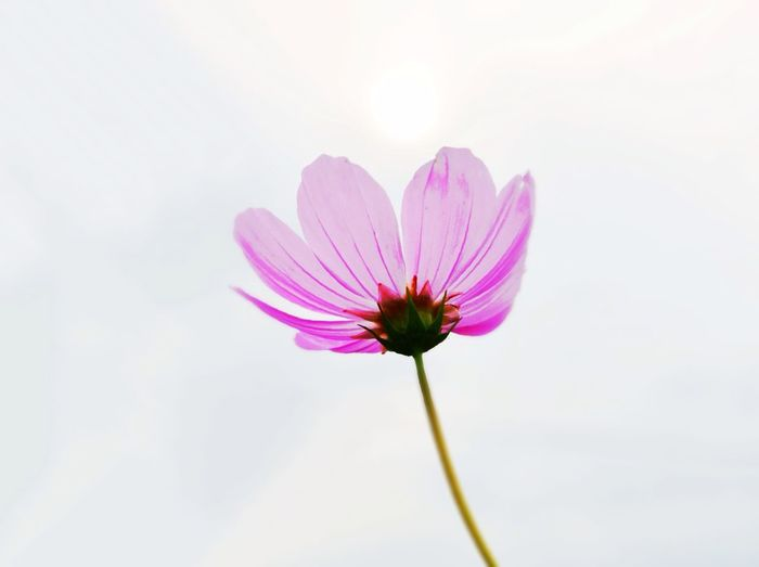 Hello World Taking Photos Nature Flowers
