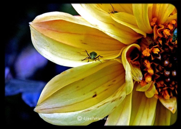 Taking Photos All_shots Onlyflowers Insects
