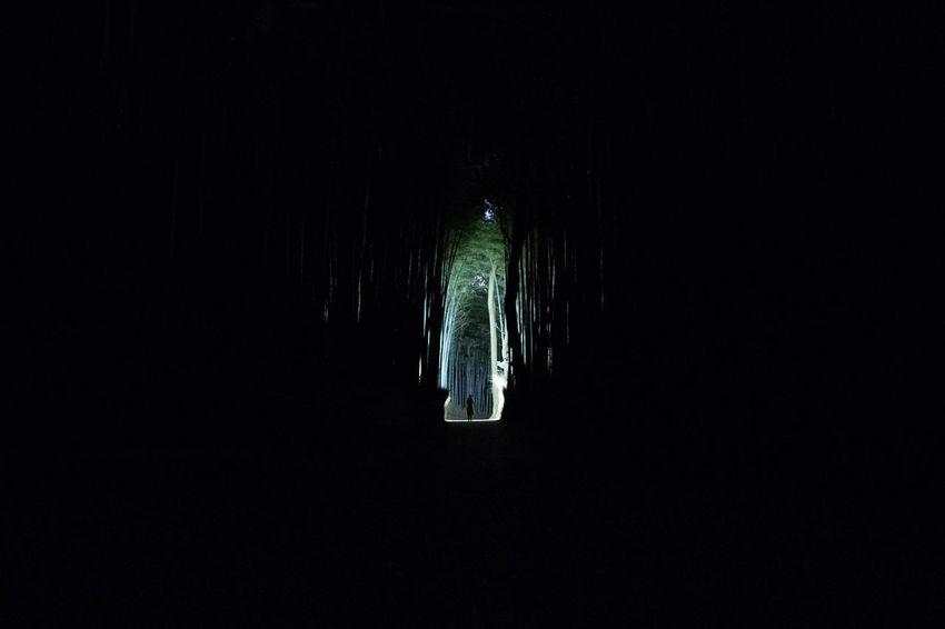 Bamboo Forest long exposure Nightphotography