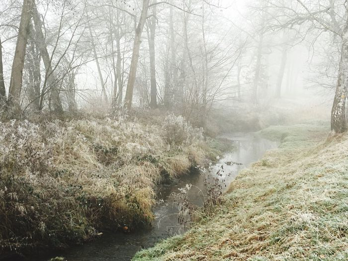December dream Switzerland Tranquility Tranquil Scene Showcase: December Foggy Morning Creek