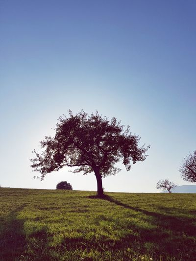 Tree Nature Field Beauty In Nature Agriculture Tranquility Outdoors Grass No People Landscape Day Sky Rural Scene