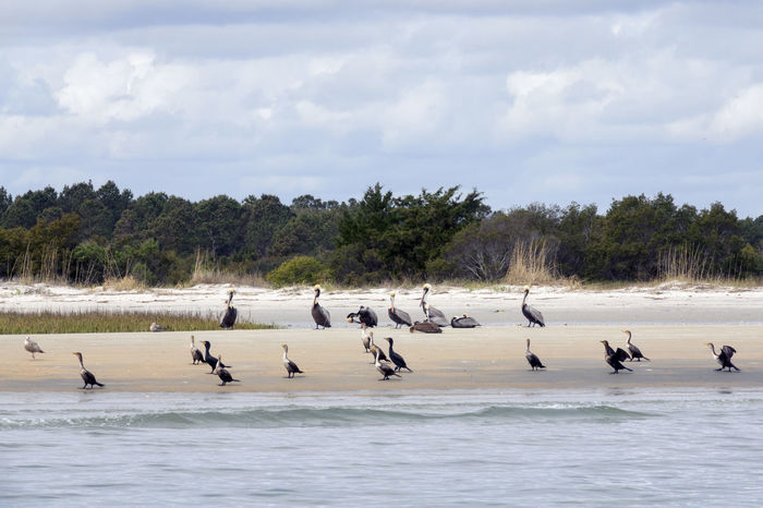 A Day To Chill Animals In The Wild Beach Beach Life Cloud - Sky Landscape_Collection Large Group Of Animals Nature Outdoors Pelicans Sony Lover Water Water Landscape