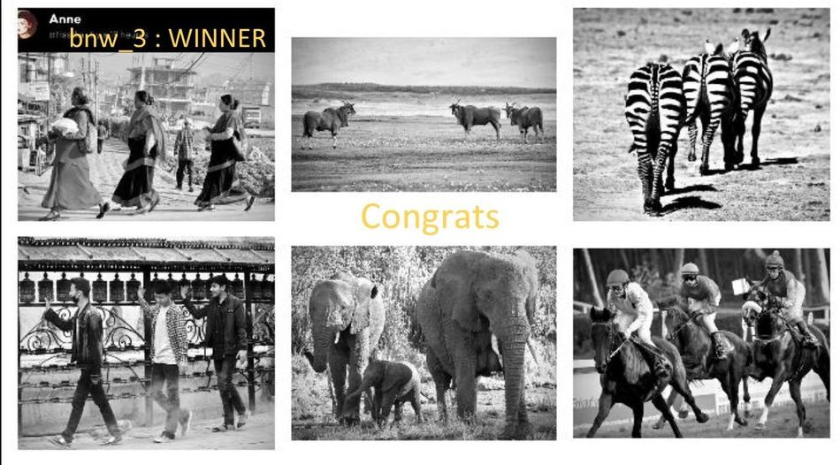 Many congratulations dear Anne, you are the winnner of bnw_3, for all of these 6 photos, which are a remarkable sample of your beautiful gallery. I particularly appreciate these 3 Nepalese women who walk at the same pace, in an identical movement, in a setting that immerses us in local life. Bravo, bravo, bravo ! Now you have to choose the theme for next week's challenge. Good luck. Friendly. Bnw_3 Bnw_friday_eyeemchallenge