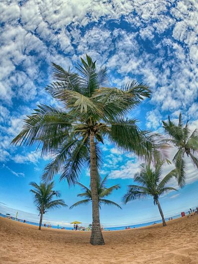 Brazil Vila Velha Beach Beauty In Nature Cloud - Sky Coconut Palm Tree Day Growth Idyllic Land Nature Outdoors Palm Tree Plant Praia Da Costa Sand Scenics - Nature Sky Tranquil Scene Tranquility Tree Tropical Climate Tropical Tree Water