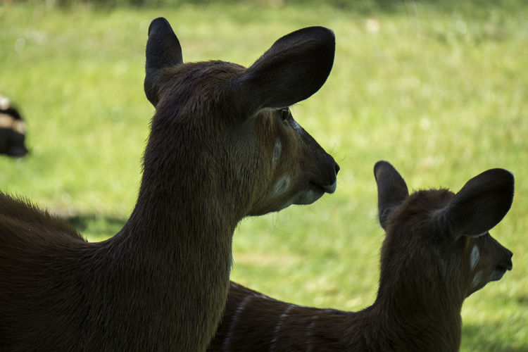 Animal Animals Sony A6000 WhatsGoingOn Lookingat Bambi