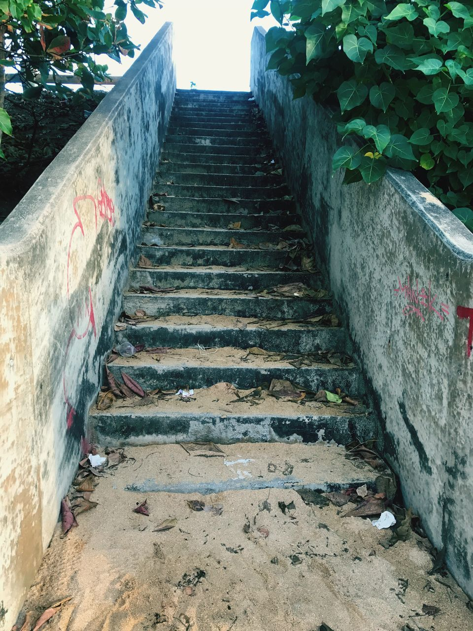 the way forward, steps, steps and staircases, day, outdoors, built structure, no people, nature, architecture, plant, tree