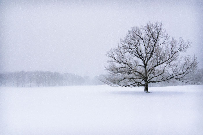 Blizzard Central Park Central Park - NYC Forest Lone Tree Snow Blizzard Snow ❄ Strorm Tree Winter