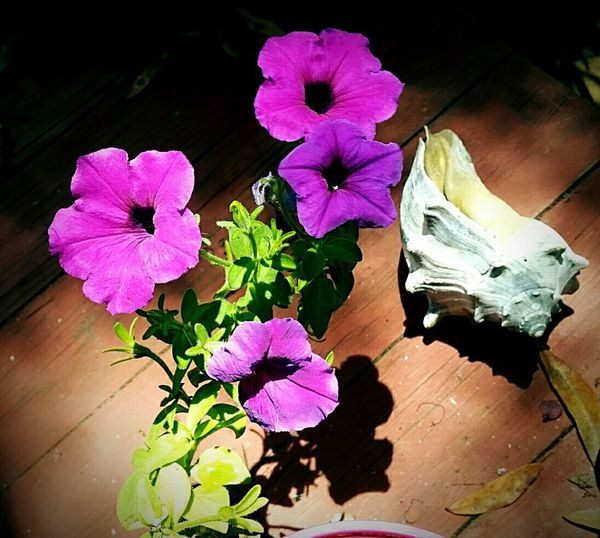 Nature On Your Doorstep New Petunias Literally On My Doorstep Love My Porch
