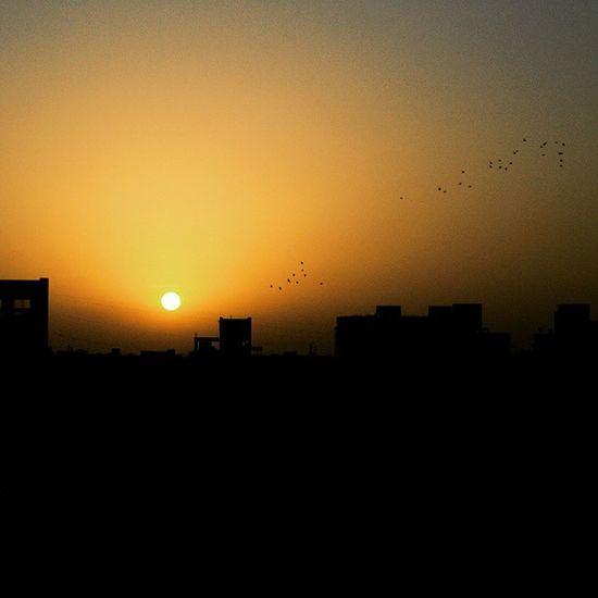 Vscocam Sunrise Morning @instagram_ahmedabad Flyingbirds Daze Razmadeit Shutterlive IluvBirds Obsession Sameplace Ilovetoclick