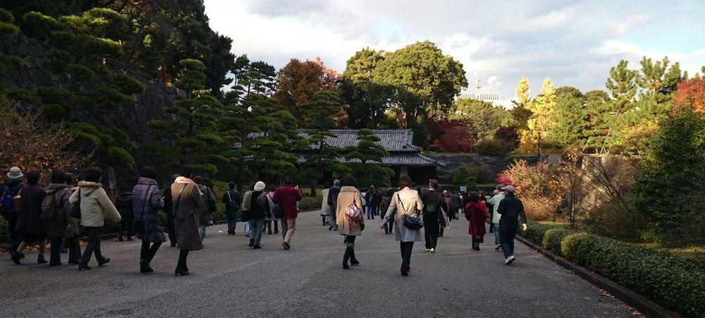 Fall Colors Japan Japan Scenery