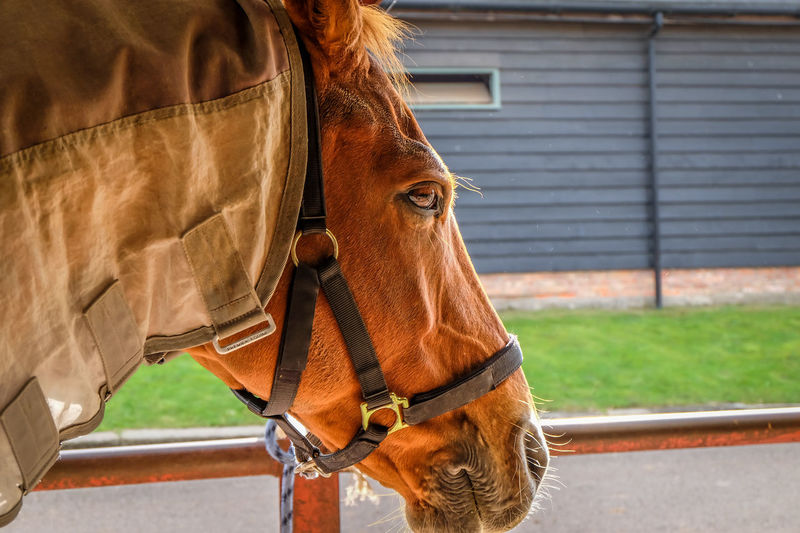 Animal Brown Close-up Horse Horse Stables Horsing Nature Outdoors Sport Stables