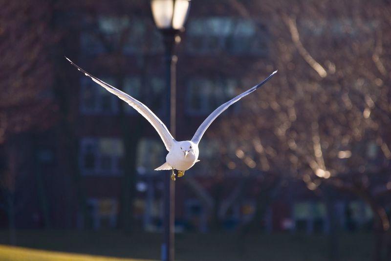 Bird flying at park