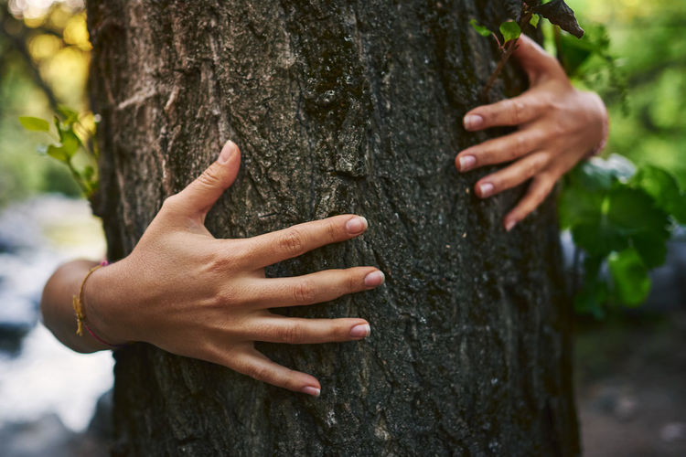 Cropped image of hand touching tree trunk