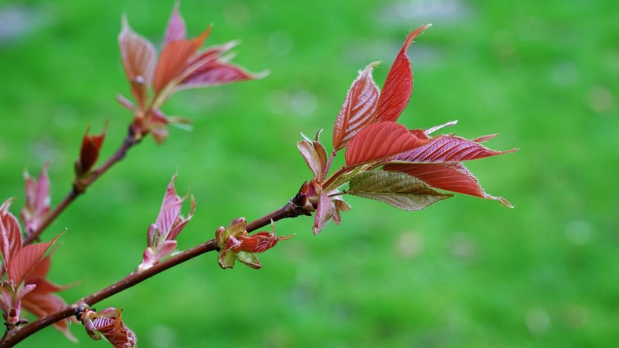 March 2019 Branch Twig Green Color New Leaves Nature Backgrounds Plant Focus On Foreground Plant Part Close-up Leaf Nature Beauty In Nature Fragility Plant Stem Vulnerability  Flowering Plant No People Growth Outdoors