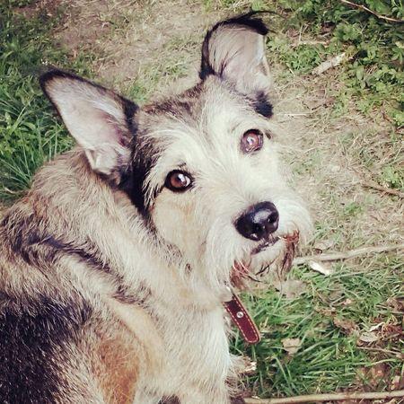 собака пес люблю мальчик Тоша Dog МояСобака Mydog Ilovemydog