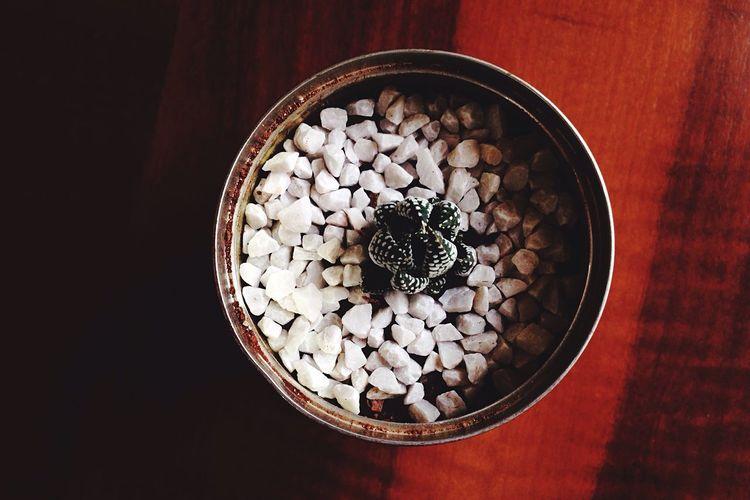 Suculenta Plant
