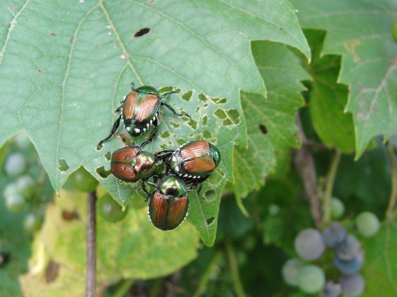 High Angle View Of Beetles On Leaf