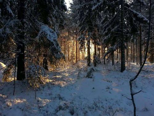 Winter Forest Hyvinkää Finland
