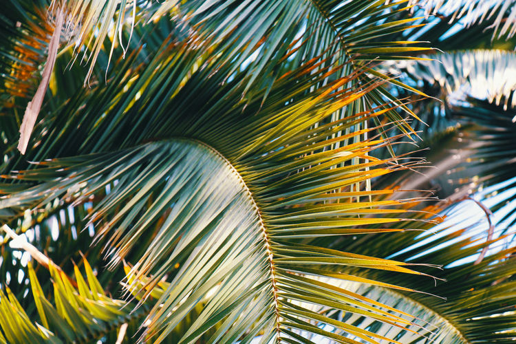 Palm Sunlight Beauty In Nature Botanical Close-up Green Color Growth Nature Outdoors Palm Leaf Palm Tree Sun Tree Yellow