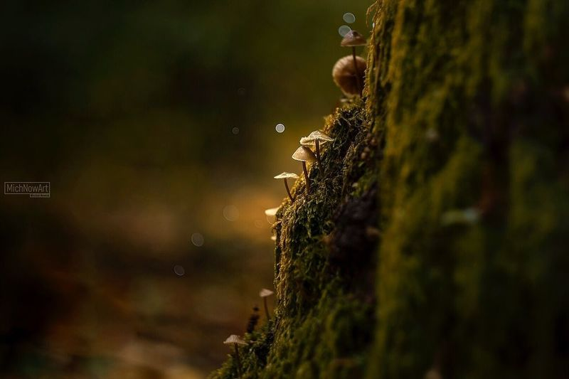 Animal Themes Nature Animals In The Wild Insect No People Outdoors Day One Animal Animal Wildlife Close-up Beauty In Nature Mushroom Canon Helios Macro Photography Light And Shadow Light Macro Nature Bokeh Beauty In Nature Autumn EyeEmNewHere