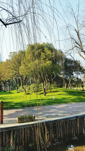 Trees Romantic Nature Love Park River Green Green Color Shanghai Relaxing Winter