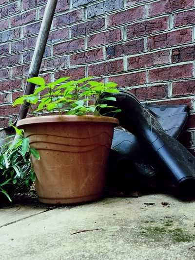 Rainy dayzzz Overcast Overcastsky Rainydayzzz Loveweather Brick Wall Potted Plant Plant No People Watering Can Outdoors Nature Close-up Architecture Built Structure Growth Day Leaf
