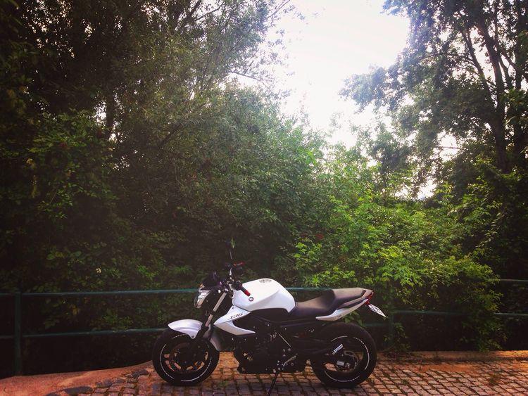 My Yamaha Xj6 Motorcycle Motorcycles Tree Bridge Landscape Gopro IPhoneography