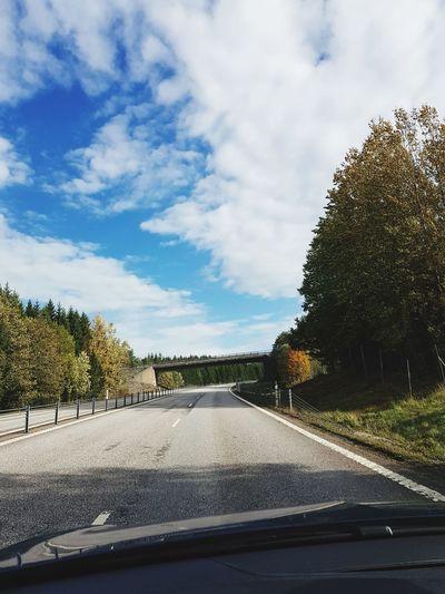 Tree Road Car