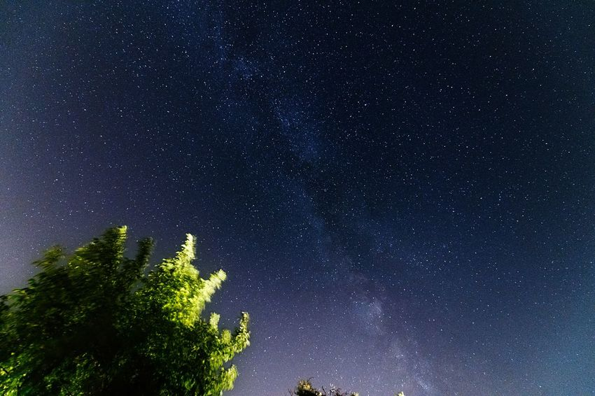 Milky Way, from Torrechiara, Parma Italy Nikon D850 Milky Way Italy Parma Summer Sky Star - Space Night Space Tree Plant Astronomy Sky Star Galaxy Space And Astronomy Outdoors Beauty In Nature Nature