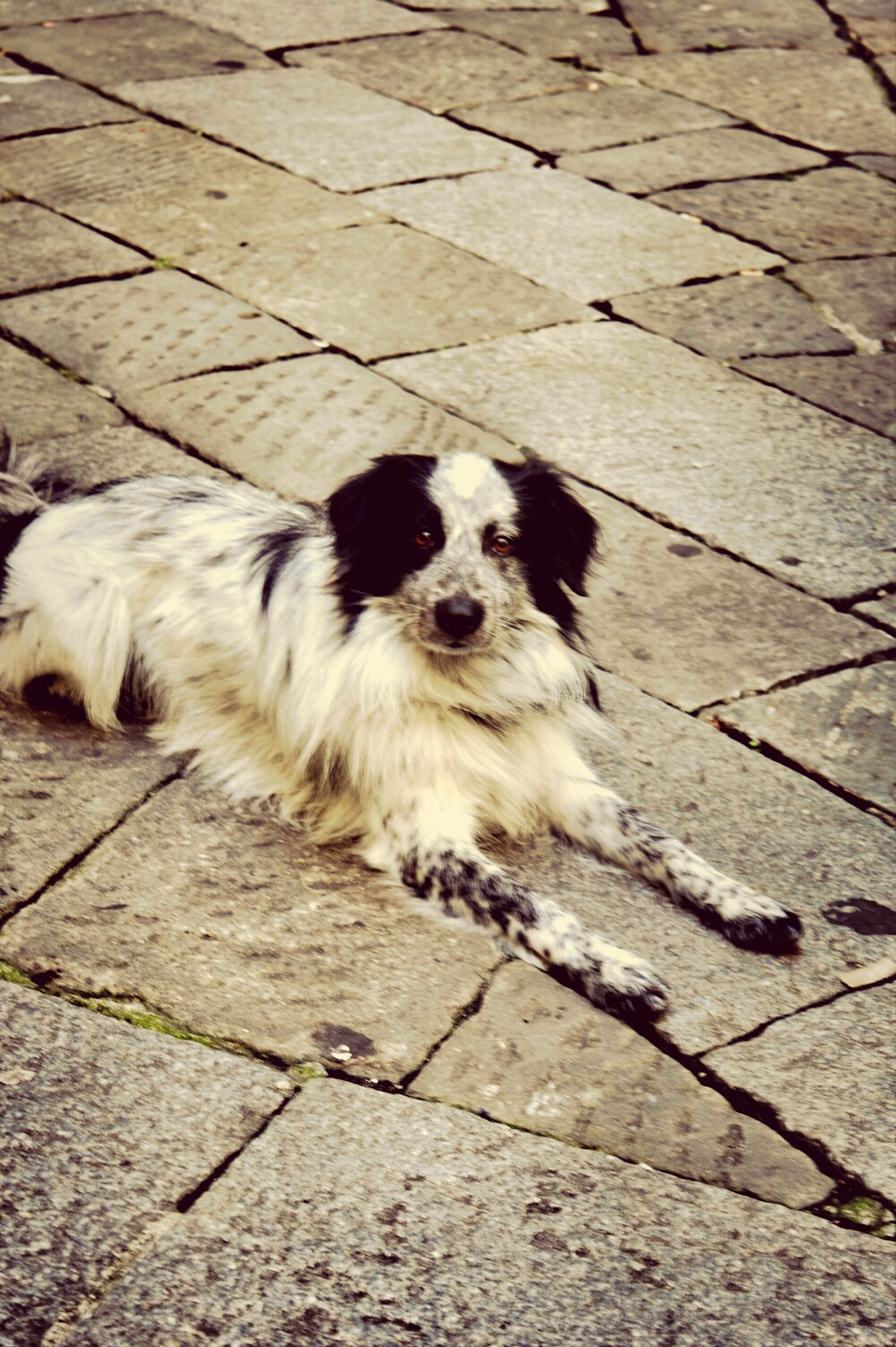 animal themes, one animal, domestic animals, mammal, pets, dog, high angle view, portrait, animal hair, looking at camera, zoology, animal head, white color, animal, no people, sitting, outdoors, full length, street, relaxation