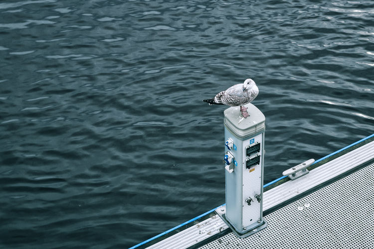 The watcher Pier Animals In The Wild Bird Blue Nature No People One Animal Outdoors Perching Resting Sea Seagull Watching Water Waterfront