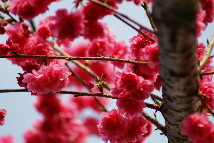 Low angle view of pink flowers blooming outdoors