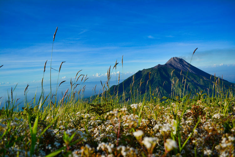Very Beauty view Mt. Merapi. at Mt. Merbabu . Boyolali, Jawa Tengah, Indonesia. EyeEm Best Shots Mountain Peak Surface Level Environment Outdoors Landscape Non-urban Scene Grass Idyllic Blue Day No People Land Cloud - Sky Nature Scenics - Nature Mountain Growth Tranquil Scene Tranquility Plant Sky Beauty In Nature Selective Focus EyeEm Selects Autumn Mood My Best Photo