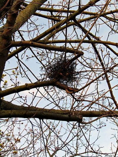 Beauty In Nature Bird Nest Bird Nests Nature Nature Photography Nest Tree